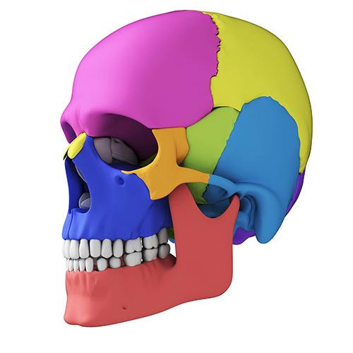 頭蓋骨の歪みは、体の機能的な部分の異常を知らせるサインです