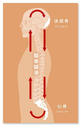 事前に仙腸関節を調整することで、頭蓋骨調整の効果がでやすくなります