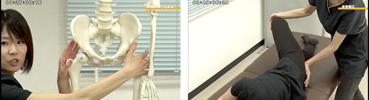 骨模型とデモンストレーションで、施術のポイントがわかりやすく学べます