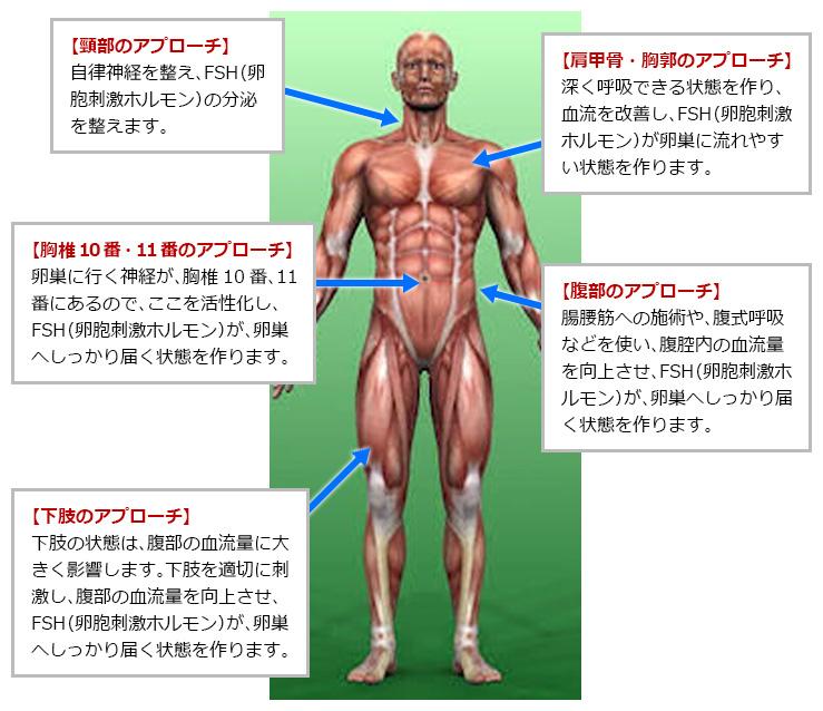 その秘訣は、下記の部位の筋肉や骨格へ施術することにあります