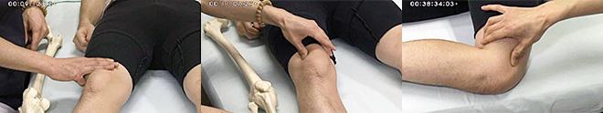 3ヶ月目のテーマは、「膝痛に対するマッスルセラピー」です